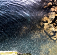 małe ryby w bałtyku