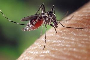 Bezpieczne repelenty na komary i insekty. Czego mogą używać dzieci?