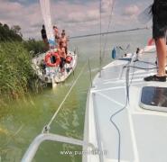 Jacht w trzcinach